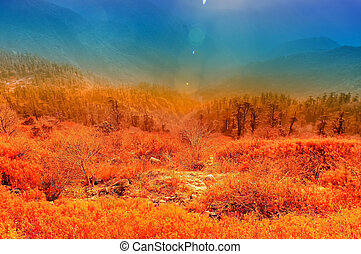 lunhgthang, sikkim, hiver, ouest, inde, bengale, frais, levers de soleil
