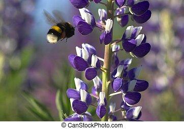 Lupin and Bumblebee