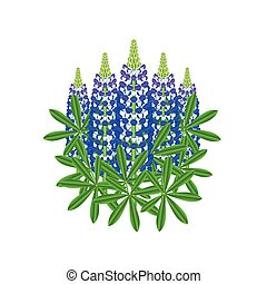 Lupine flowers isolated vector