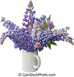 Lupines isolated in vase