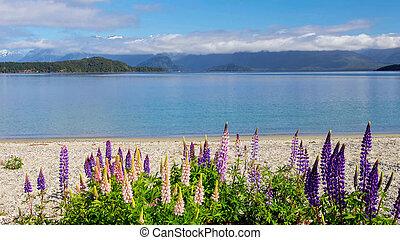 Lupinus blossom at Lake Tekapo