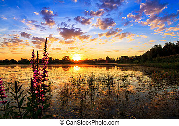 Beautiful sunrise reflected in a pond in national park 'De Blauwe Kamer' in the Netherlands