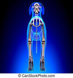 lupus, esqueleto, familiaris, -, espalda, perro, anatomía, canis, vista