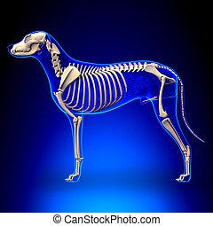 lupus, esqueleto, familiaris, -, perro, anatomía, canis, vista lateral