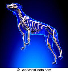 lupus, esqueleto, familiaris, -, perro, anatomía, perspectiva, canis, vista