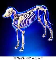 lupus, skelett, familiaris, -, hund, koerperbau, perspektive...