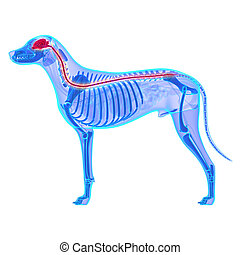 lupus, system, familiaris, nervös, -, hund, o, freigestellt...