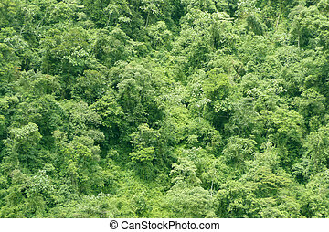 luscious green rain forest background