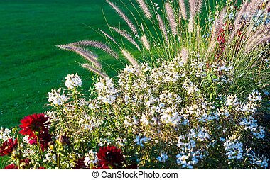 Lush blooming flower bed with colorful mix of summer flowers