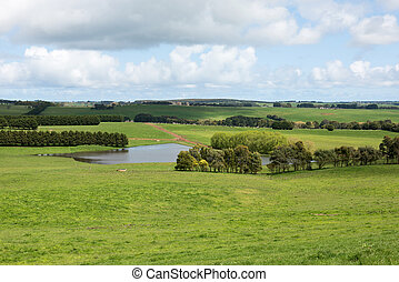 Lush Farmland, Southern Victoria, Australia