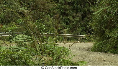 Lush Fern Shrub At A Remote Mountain Road, Bolivia -...