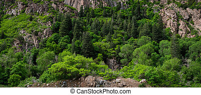 Lush foliage and trees along Storm Mountain - Panorama of ...