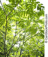 vibrant green background of lush foliage