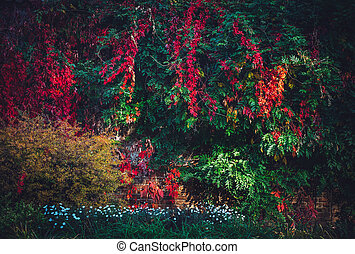 Lush foliage with colorful fall leaves. - Lush foliage with ...