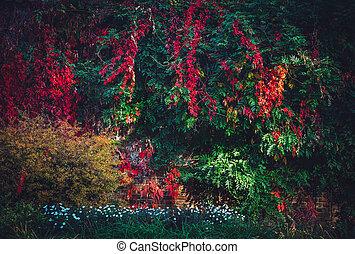 Lush foliage with colorful fall leaves.
