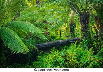 Lush Forest - Beautiful lush palms growing wild