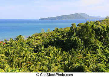 Lush forest of Koh Rong island, Cambodia