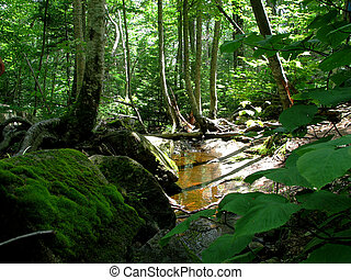 Lush Forest - small creek running through a lush green...