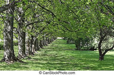 Lush Garden Alley - Lush green garden alley with shimmering...