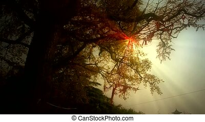 lush ginkgo tree in breeze,Trunk
