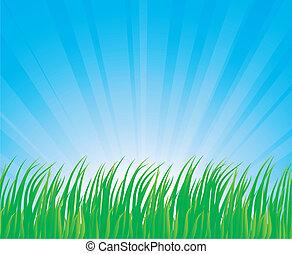 Lush grass. - Fresh green grass. Vector illustration.