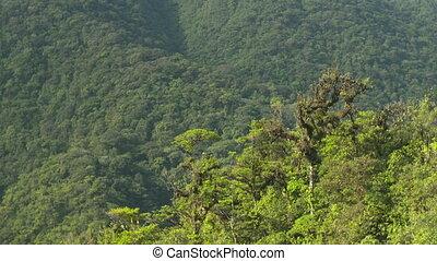 Lush Green Dense Tropical Forest, C. America - Medium...