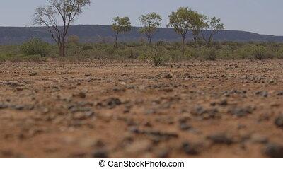 Lush green desert trees, Northern Territory - Medium...