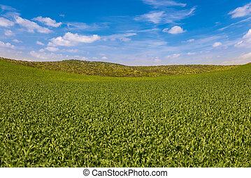 Lush Green Farmland Landscape with Blue Sky