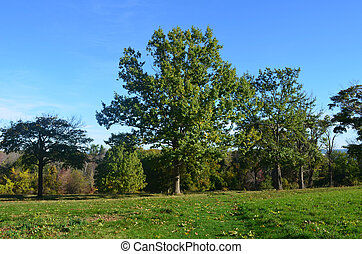 Lush green field and trees in Worlds end park