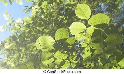 Lush green foliage filling the frame