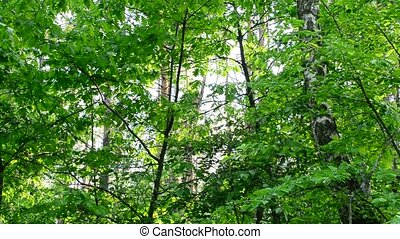 Lush green foliage in forest gently swaying in wind in sunny day