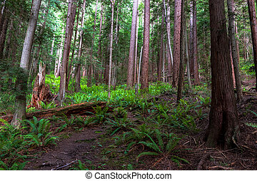 Lush green forest trail overgrown with ferns and plans