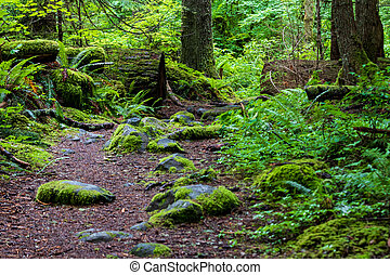 Lush green forest trail overgrown with ferns and plant life