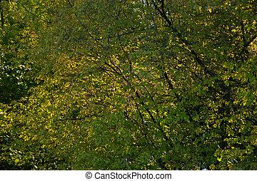 Lush green-gold foliage in the sunlight