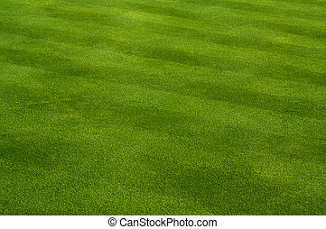 Lush Green Grass with Lawn Mower Pattern