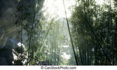 Lush green leaves of bamboo near the shore of a pond with...