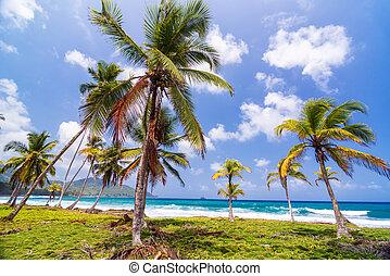 Lush Green Palm Trees