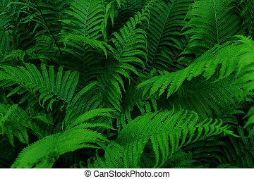 Lush green wild fern