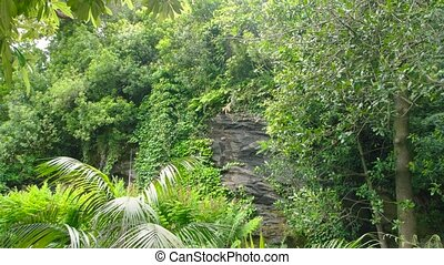 Lush greenery and rock. Plants in summer.