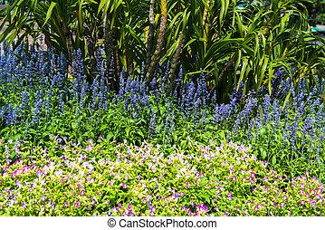 Lush landscaped garden