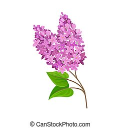 Lush lilac. Vector illustration on a white background.