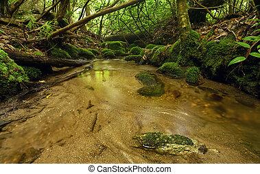 Lush Rain Forest Stream
