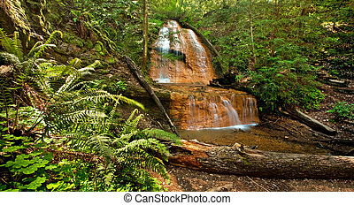 Lush rain forest waterfall and ferns: Golden Cascade Falls in Big Basin State Park, California