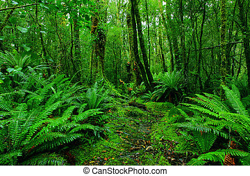 rainforest path - lush rainforest path