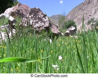 Lush summer pasture in Afghanistan - Lush summer pasture...