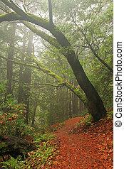 Lush temperate rain forest in Northern California
