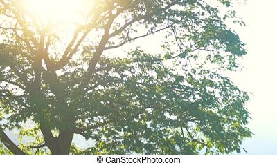 Lush tree and sun. Branches and green foliage.