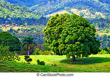 Lush tropical landscape with single tree