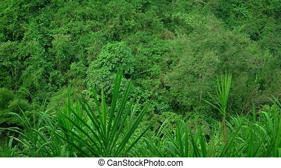 Lush, tropical vegetation swaying in the breeze. - Lush,...