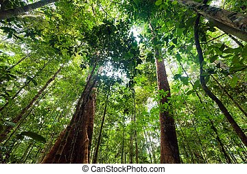 Lush undergrowth jungle vegetation